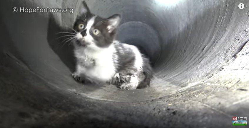管の真ん中で止まる猫