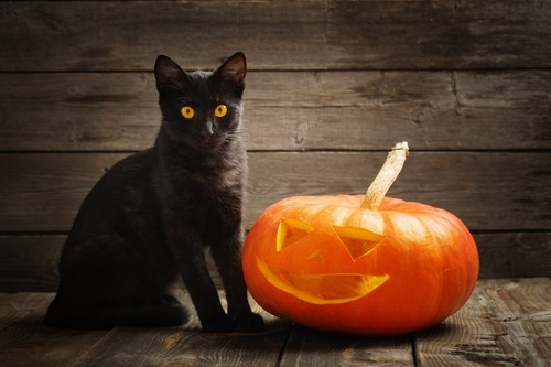ハロウィンのかぼちゃと黒猫