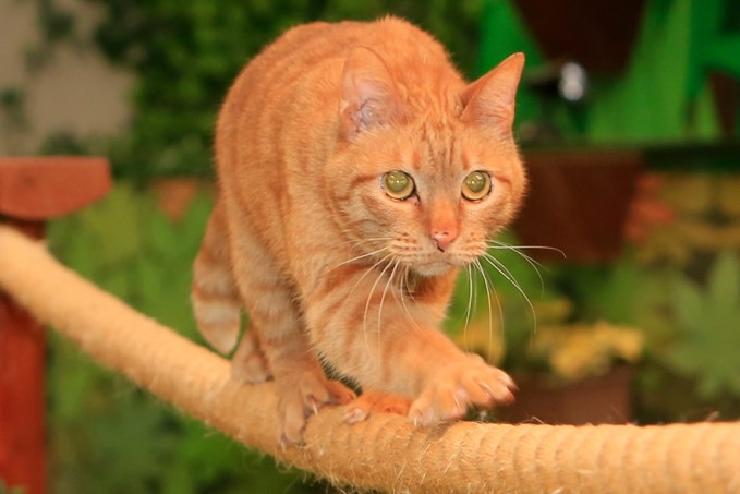 綱を渡る猫