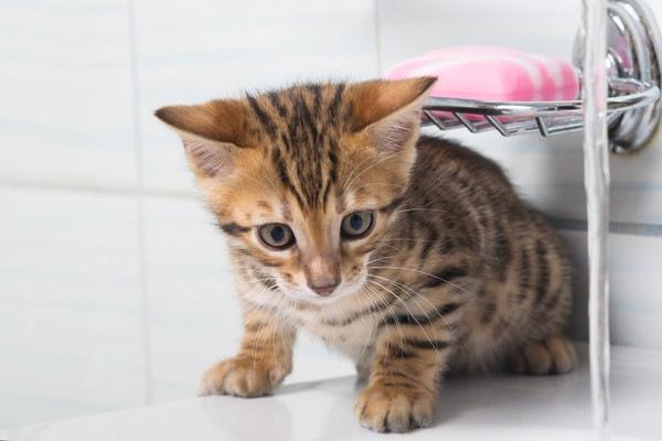 お風呂場が気になる子猫