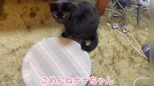 座布団の横に座る猫