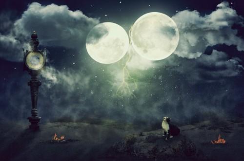月夜に居る猫