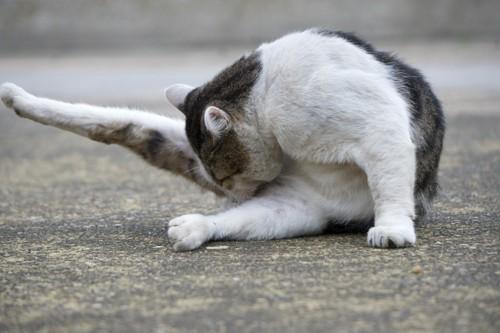 お尻を気にする猫