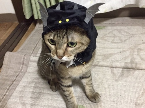 コウモリをかぶった猫