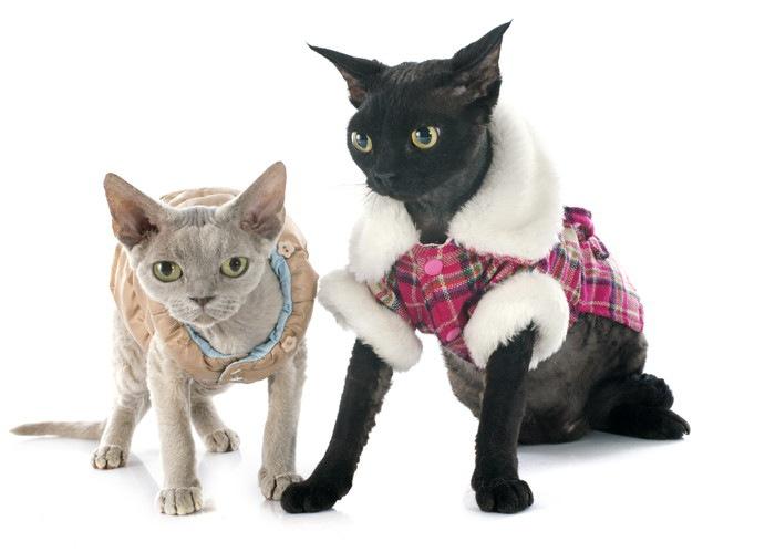 服を着た猫2匹