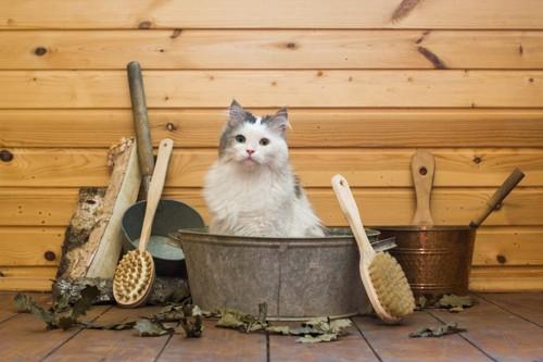 猫シャンプー3
