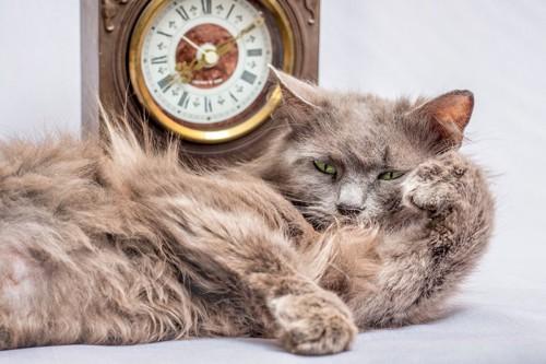 時計の前で寝転がる長毛猫