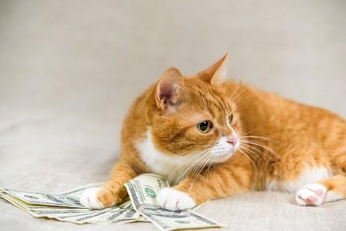 お金を集める猫