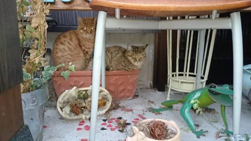 愛猫プランターで休憩中