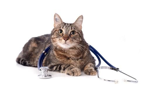 聴診器を持つ猫