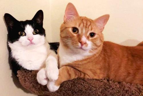 キャットタワーの兄弟猫