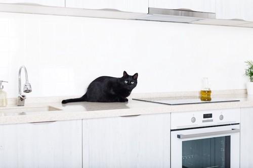 キッチンの上に乗る黒猫