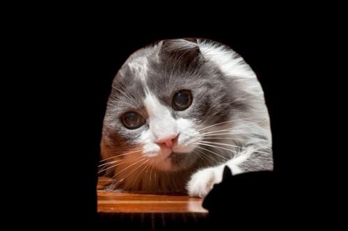 ネズミを覗き込む猫