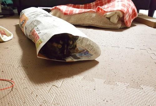 新聞紙のトンネルと猫