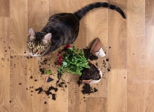 割れた鉢植えと猫