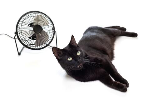 扇風機の前でくつろぐ黒猫