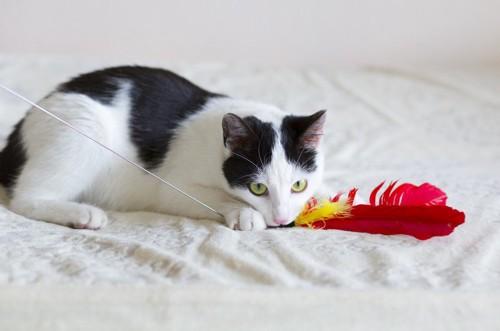 赤い羽根の猫じゃらし