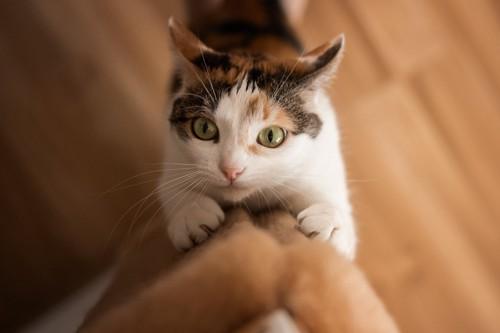 高いところに爪とぎをする猫