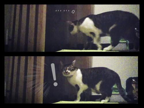 こちらに気づく猫