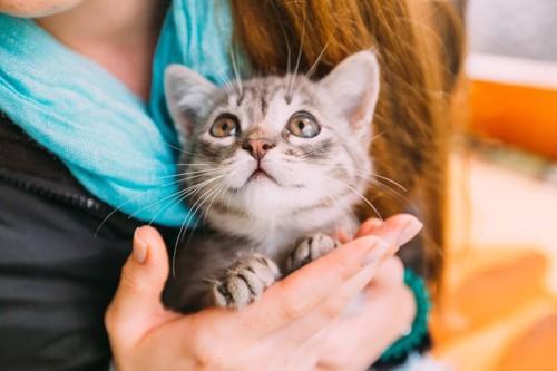 人を見る子猫