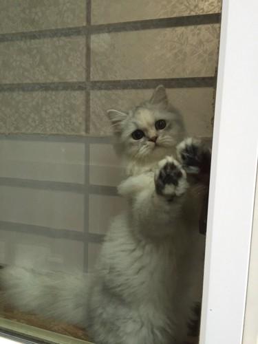 寂しそうに窓からお見送り