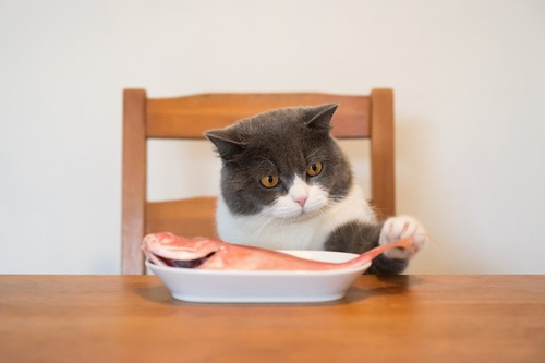 魚を取ろうとする猫
