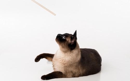 棒を猫に差し出している