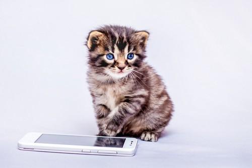 電話をかける子猫