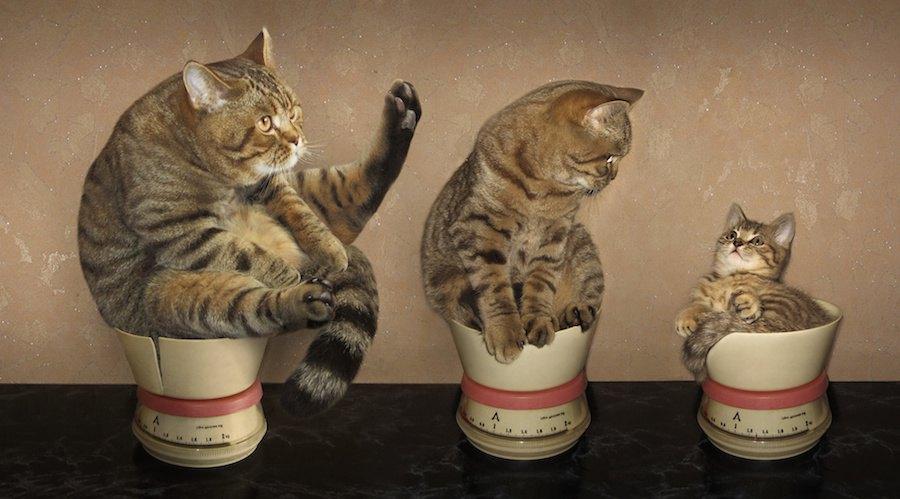 大きさの違う三匹の猫