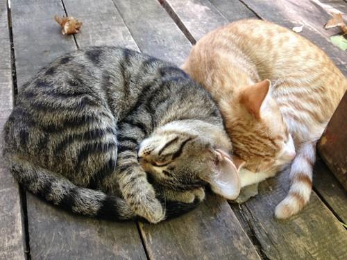 同じ姿で寝る2匹の猫