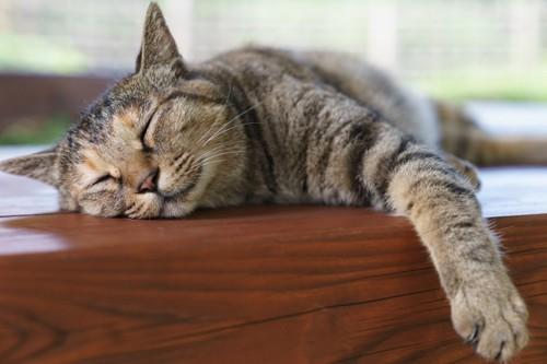 床で横たわる猫