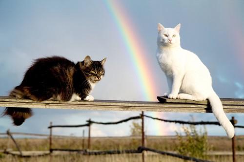 虹のたもとにいる猫たち