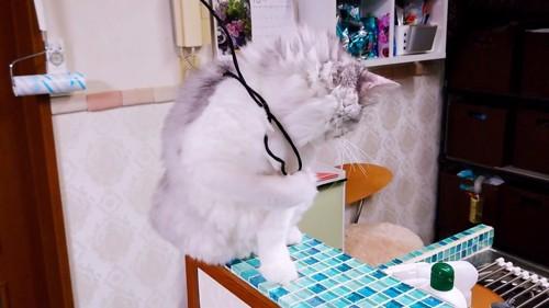 おもちゃの紐が背中に乗っている猫