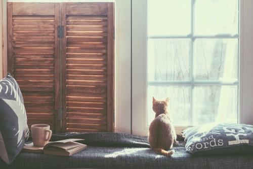 窓から外を見つめる猫