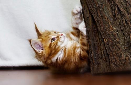 木で爪を研ぐ猫