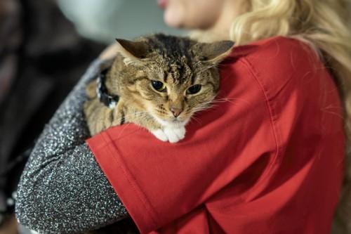 赤い服の人に抱っこされている猫