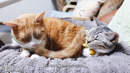 子猫の上に乗る茶白猫