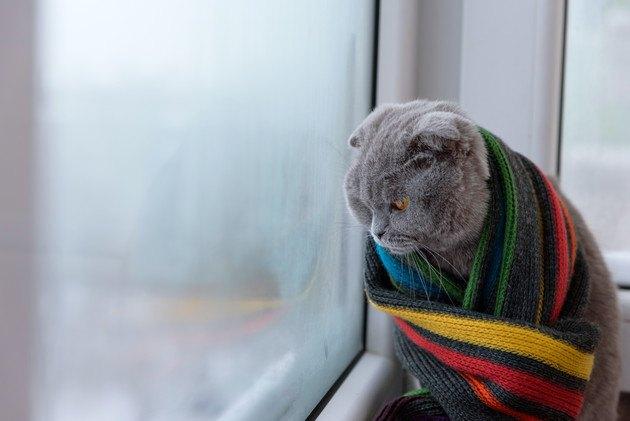 食欲不振で嘔吐した外を眺めている猫
