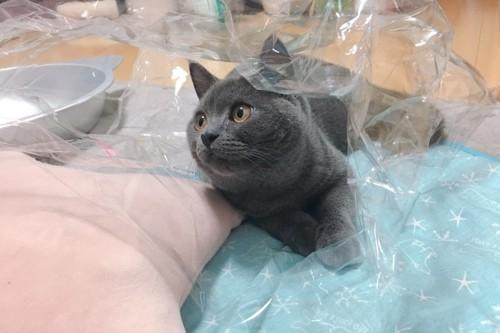 袋と遊ぶ猫