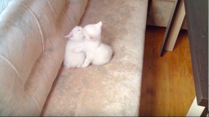 抱き合ってラブラブな猫
