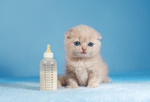 哺乳瓶の隣に座る赤ちゃん猫