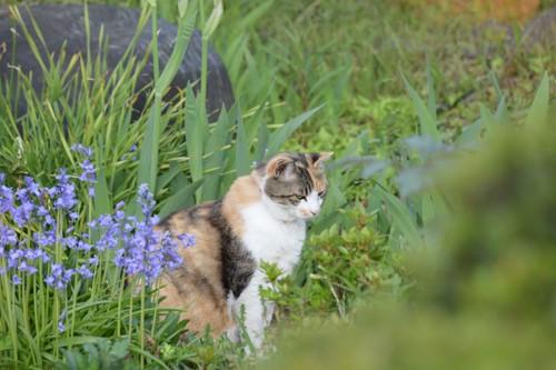 野原の三毛猫