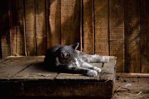 古びた倉庫で休む野良猫
