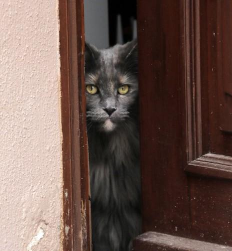 ドアの隙間からのぞく猫