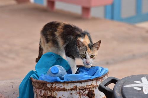 ゴミ箱の上に乗る野良猫