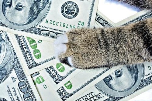 お金の上に置かれた猫の手