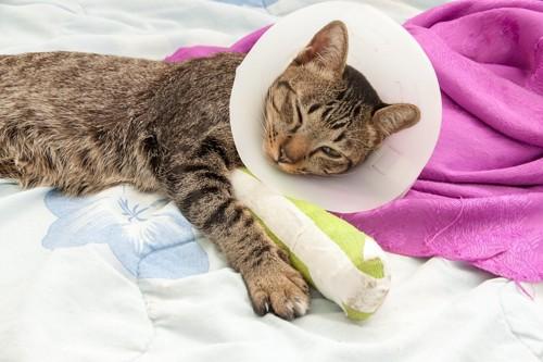 布団の上で眠る足を怪我している猫