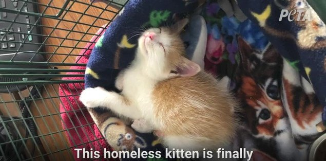 ケージで眠る子猫