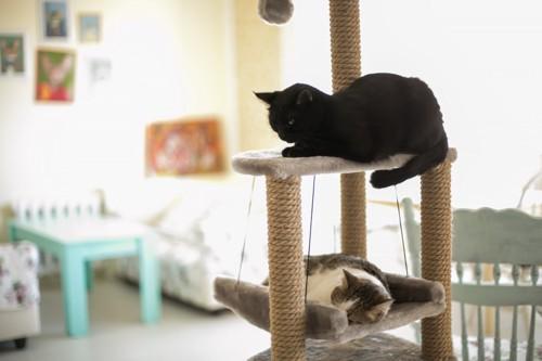 タワーに乗る猫たち