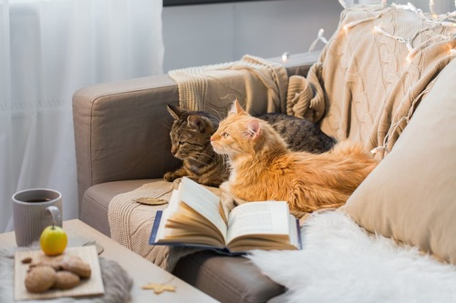 ソファーで寄り添ってくつろぐ二匹の猫